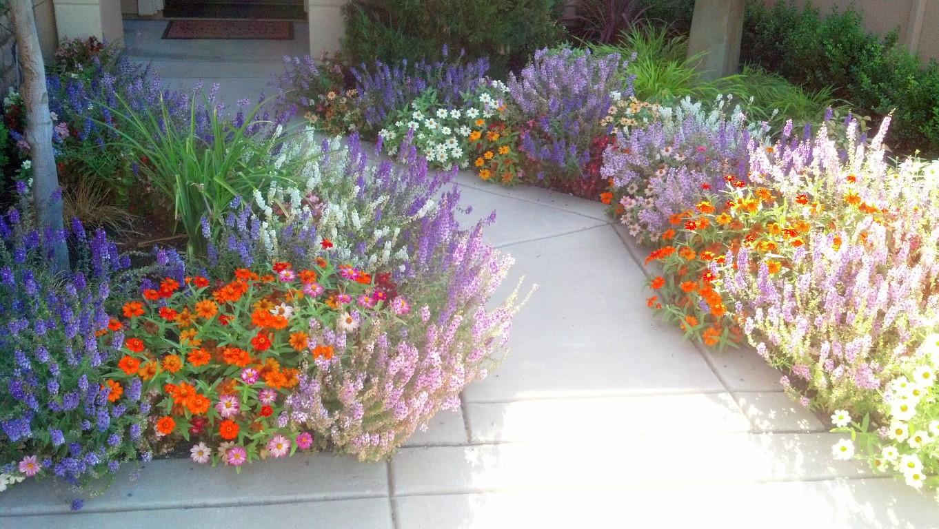 Landscape Makeover Folsom, Flower Change Folsom, Landscape Specialists  Folsom, Seasonal Flowers Folsom,