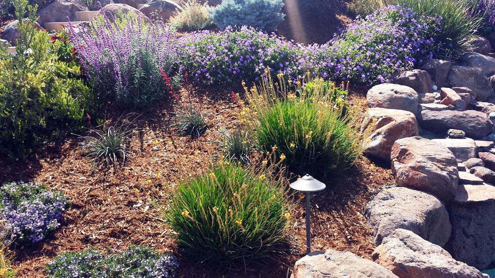 Drought tolerant landscaping folsom sacramento for Low maintenance drought resistant landscaping