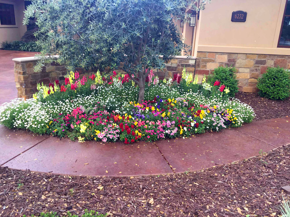 Fall winter flower beds landscape makeover folsom sacramento until it starts getting hot may then they need to be replaced with summer flowers flower beds are replaced twice a year to ensure year around color mightylinksfo