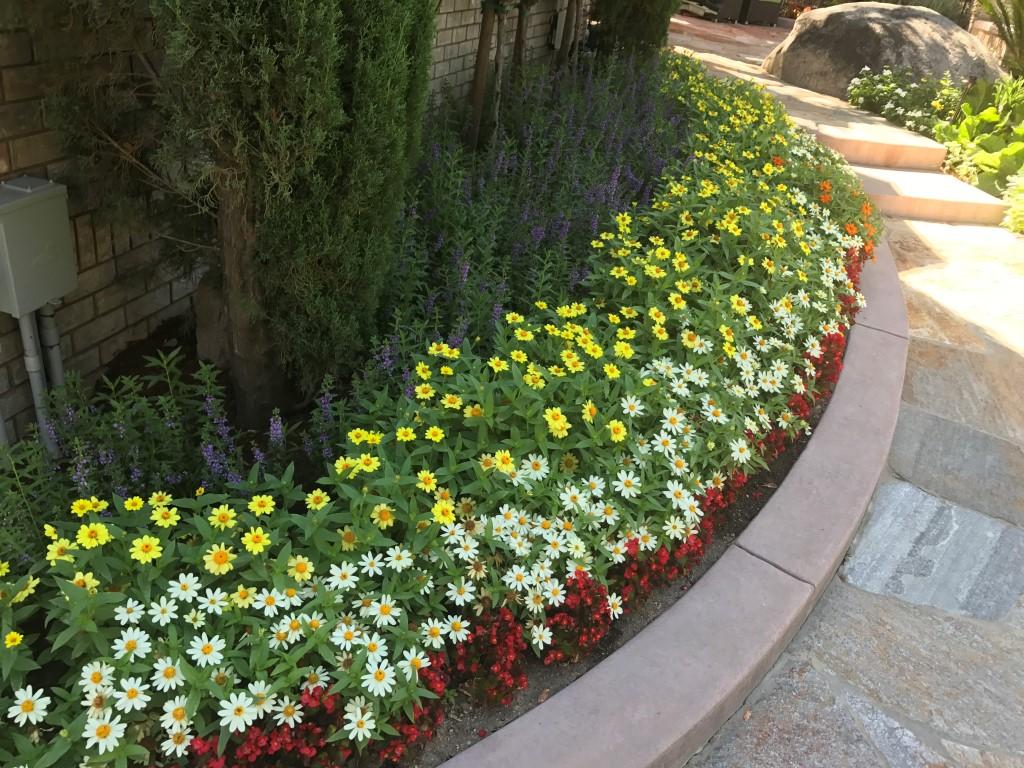 Spring Summer Flower Beds Landscape Makeover Folsom Sacramento